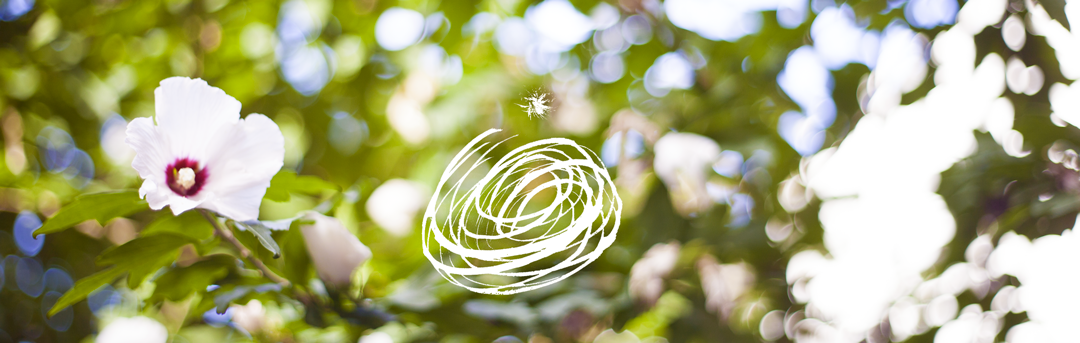 fleur-arbuste-logo-web