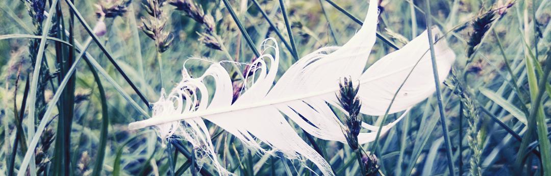 plume-bleue-web